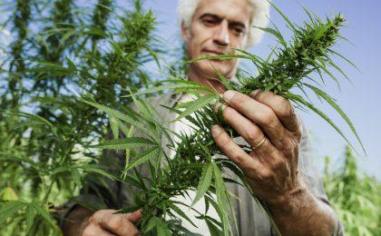 cannabis business application Michigan